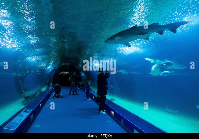 Valencia Spain Oceanografic Aquarium Stock Photos & Valencia Spain ...