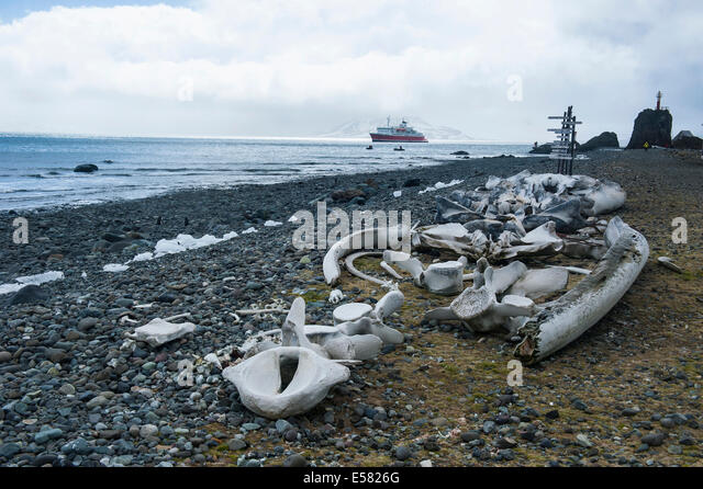Whale skeleton on beach - photo#23