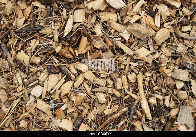Pine needles stock photos images alamy