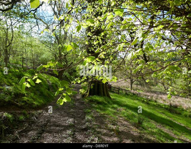 tree path track leaves - photo #43