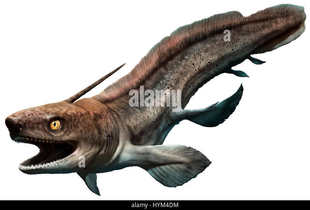 Xenacanthus Shark