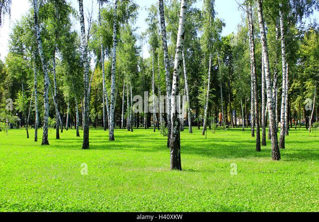 Birchwood Nature Park