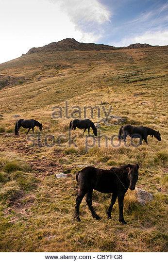 Pastoralisme Stock Photos & Pastoralisme Stock Images