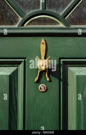 Golden Fox Knock Door. Green Door.   Stock Image