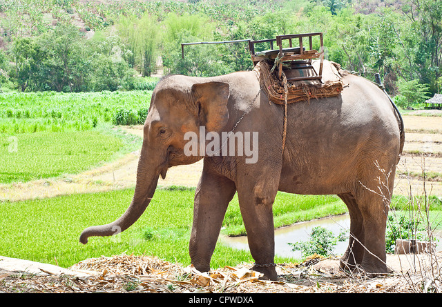 Huge camp stock photos huge camp stock images alamy for Elephant barcellona