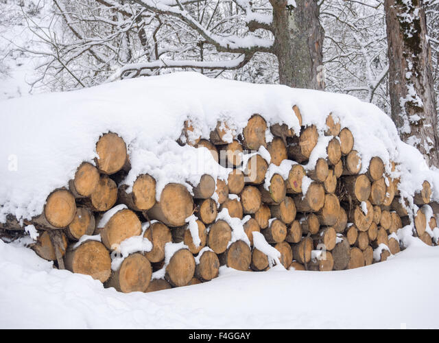 Sawn lumber stock photos sawn lumber stock images alamy for What is a tree trunk covered with 4 letters