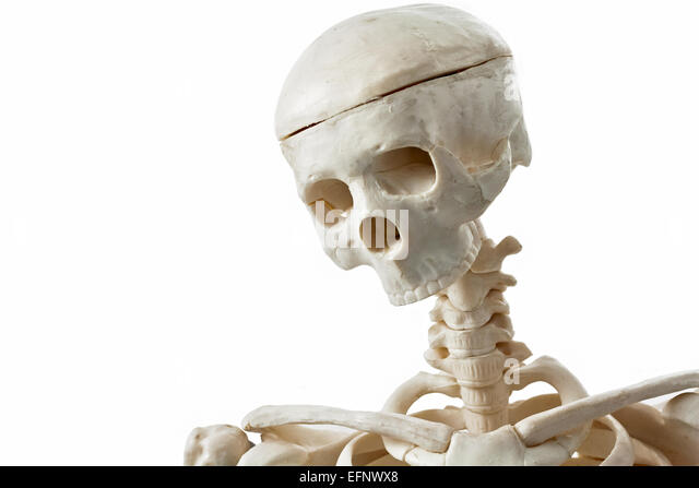 toy skeleton stock photos & toy skeleton stock images - alamy, Skeleton