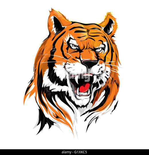 Angry Head Tiger Illustration Vector on Roar for poster, card design