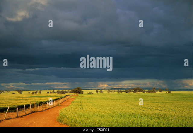 wheatfields-and-approaching-storm-dalwal
