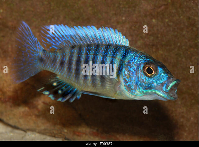 Side Striped Stock Photos & Side Striped Stock Images - Alamy