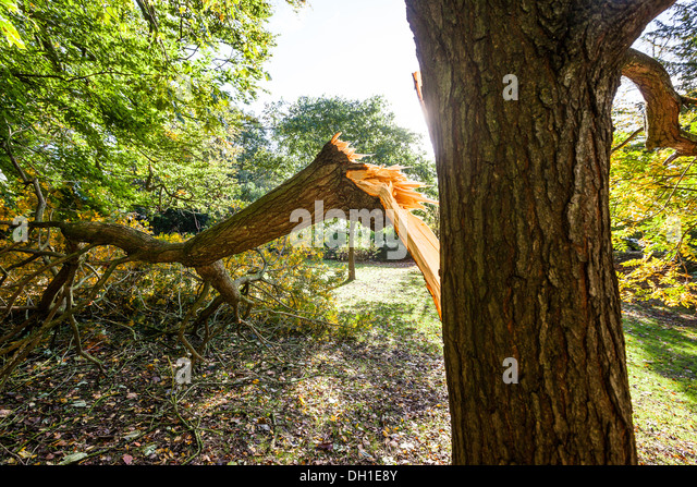 Broken Tree Branch Stock Photos &amp- Broken Tree Branch Stock Images ...