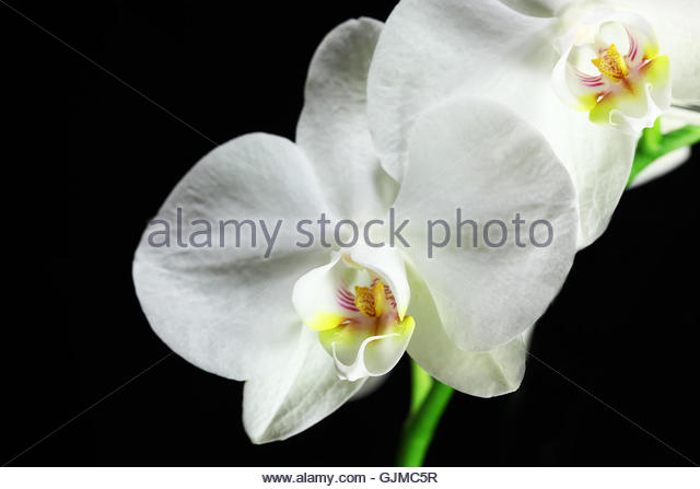 Bleed Stock Photos Bleed Stock Images Alamy