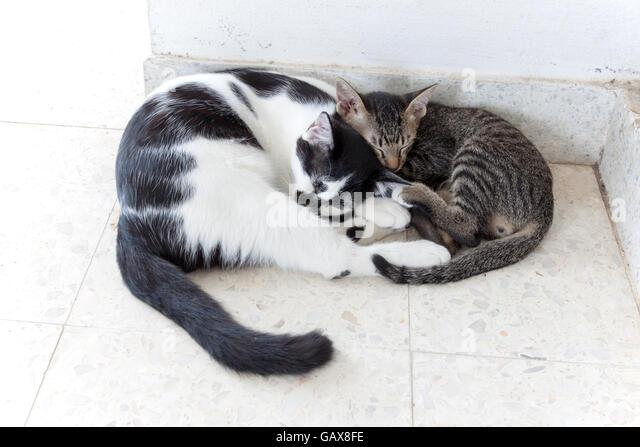best domestic cats