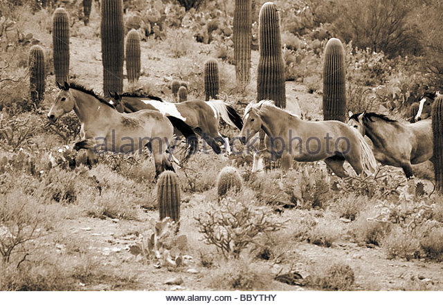 Stampedes Stock Photos Stampedes Stock Images Alamy