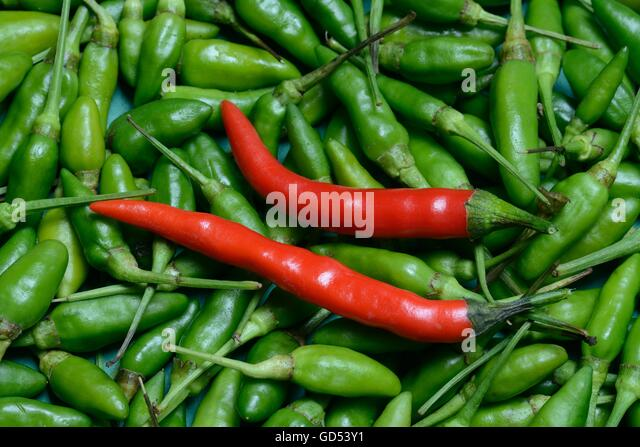 red chili peppers capsicum annuum as Of the five domesticated chilli species, capsicum annuum is the most common and extensively cultivated, both commercially and in home gardens as well.