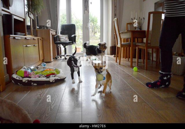 Dog Rescue Centres In Murcia Spain