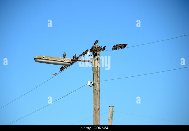 Electricity Wire Birds Stock Photos & Electricity Wire Birds Stock ...