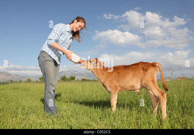 IMAGE(http://l7.alamy.com/zooms/5df778270ac341839415f3470524fad6/woman-feeding-baby-calf-in-grassy-field-c052c5.jpg)