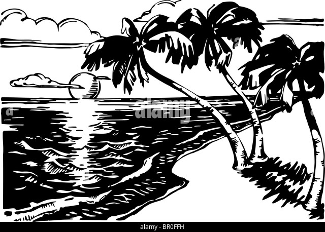 A Blak And White Picture Of Sandy Beach With Palm Trees