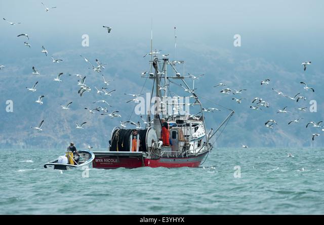 Marine Harvest Stock Photos & Marine Harvest Stock Images ...