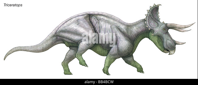 Triceratops Three Horned Face Massive Late Cretaceous Herbivore That Was One