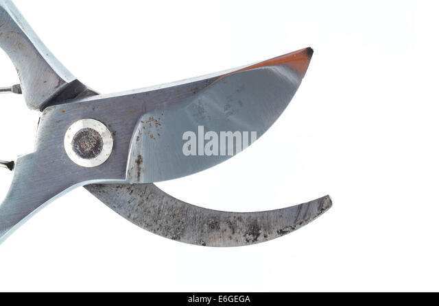 Pruning shears hedge stock photos pruning shears hedge for Hand held garden shears