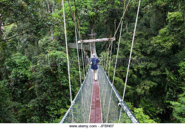 A man walks across a canopy walkway in the rainforest of Gunung Mulu National Park. & Rainforest Canopy Walkway Borneo Stock Photos u0026 Rainforest Canopy ...