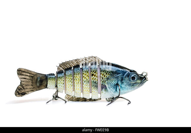 Bass fish cut out stock images pictures alamy for White bass fishing lures