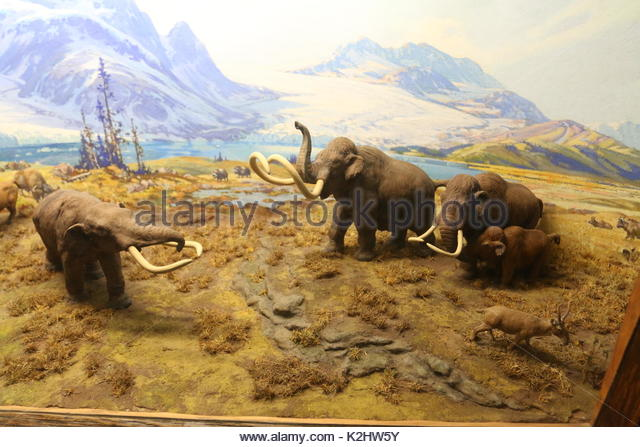 the origins of the woolly mammoths Woolly mammoth definition is - a heavy-coated mammoth (mammuthus  primigenius) formerly inhabiting the colder parts of the northern.