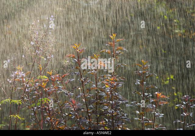 Gartenpflanzen  Gartenpflanzen Stock Photos & Gartenpflanzen Stock Images - Alamy