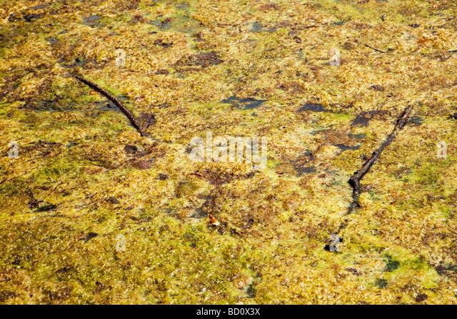 Scum Stock Photos Amp Scum Stock Images Alamy