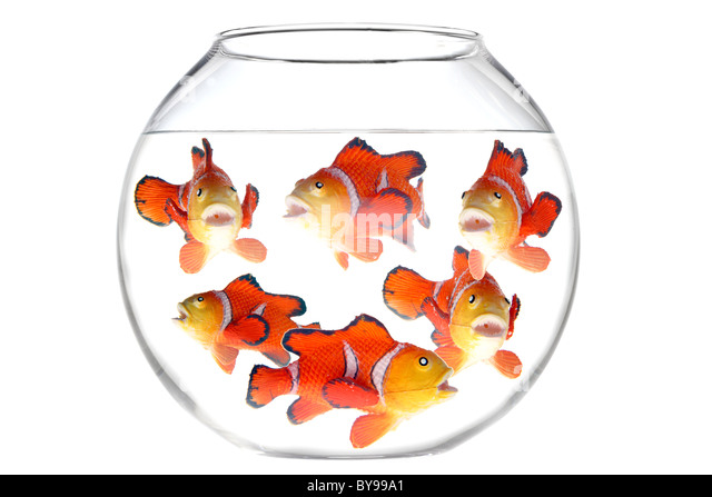 Round fish bowl stock photos round fish bowl stock for Fish bowl toy
