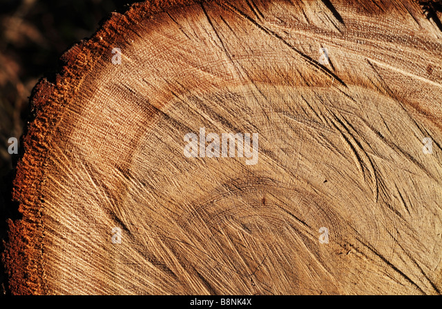 Dating wood by saw marks