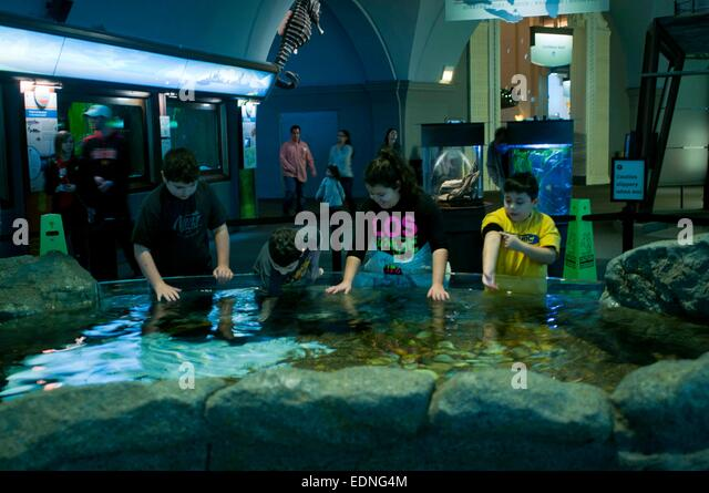 a report from a visit in the sheds aquarium in chicago Enjoy a two-night stay and two tickets to one of chicago's most popular attractions with the shedd aquarium package from chicago mart plaza.