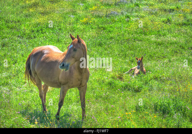 horse and puppy stock photos amp horse and puppy stock