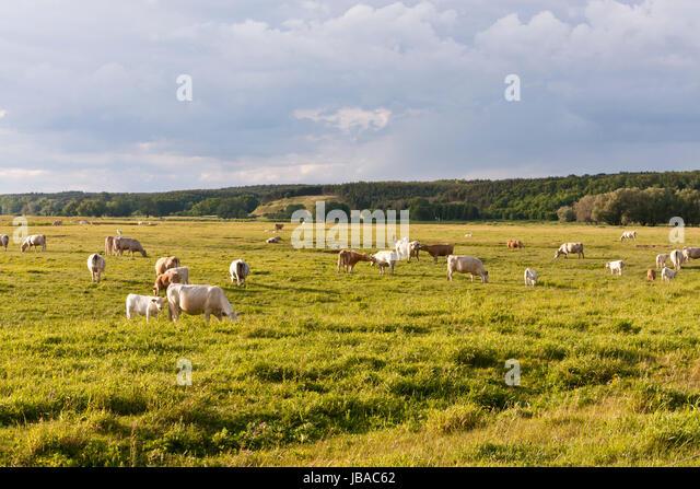 herd deutschland