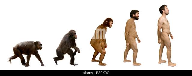 Evolution Of Man Stock Photos & Evolution Of Man Stock Images - Alamy