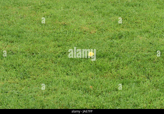 Well Tended Stock Photos Amp Well Tended Stock Images Alamy