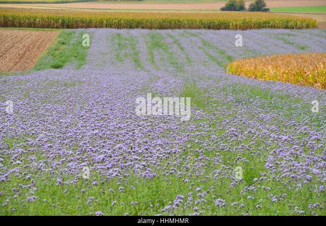 Bodenfrucht stock photos bodenfrucht stock images alamy for Soil improvement