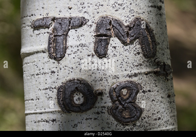 Initials carved on tree stock photos