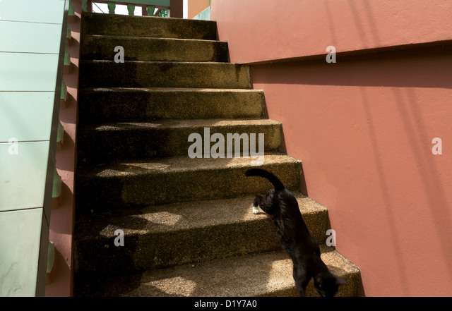 Lovely Search Results For Cat Stairway Red Handrail Stock Photos And Images