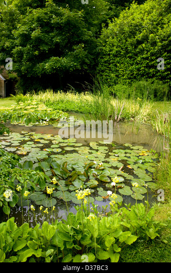 Lilies plants shrubs stock photos lilies plants shrubs for Large pond plants