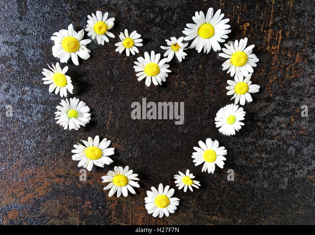 heart wreath frame with chamomile flowers on stone with metallized effect background flat lay