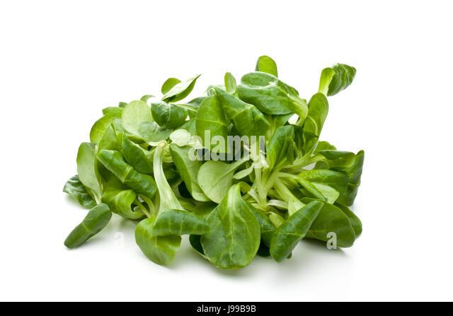 Songino salad italy stock photos songino salad italy for Songino valeriana