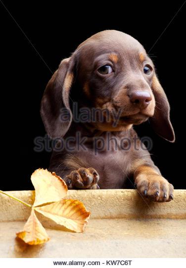 Dog Ate Hot Dog Wrapper