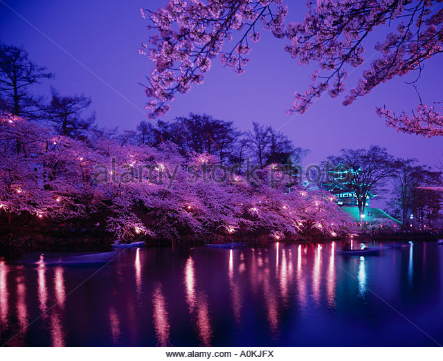 this cherry blossom night collection 11 wallpapers