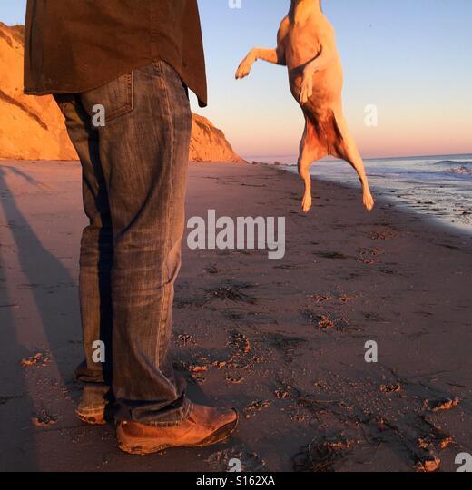 Chipping Sodbury Dog Walks