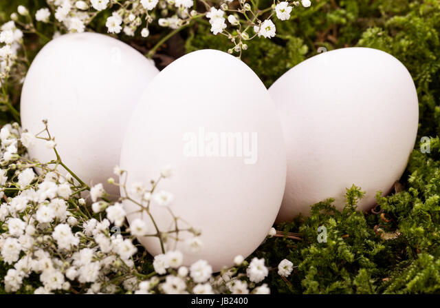 Eiersuche stock photos eiersuche stock images alamy - Dekoration ostern ...