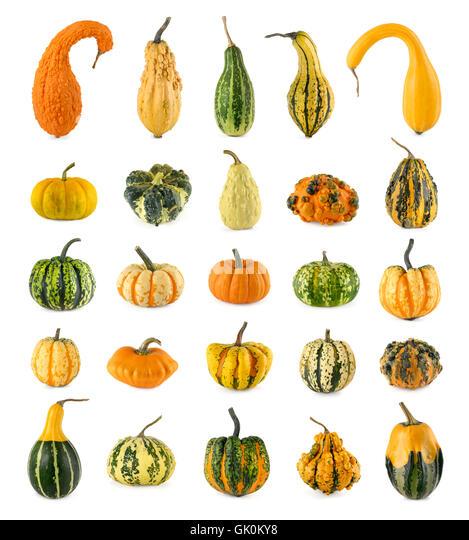 White Decorative Gourds