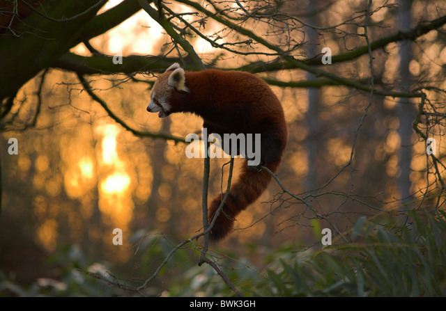 fulgens or shining - photo #38